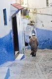 Chefchaouen, cena de Marrocos fotografia de stock royalty free