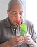 Cheiro de uma rosa Fotos de Stock Royalty Free