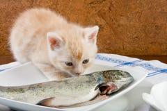 Cheiro Fishy foto de stock royalty free