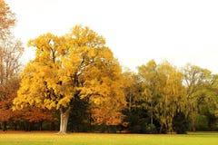 O outono é Foto de Stock