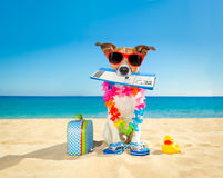Chek in boarding pass summer dog. Jack russell dog relaxing in summer vacation holidays with check in boarding pass ticket and bag or luggage at the ocean beach Royalty Free Stock Photography