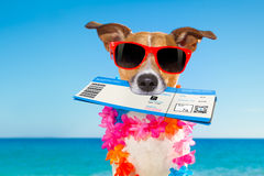 Chek in boarding pass summer dog Stock Images