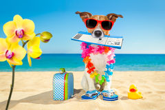 Chek in boarding pass summer dog. Jack russell dog relaxing in summer vacation holidays with check in boarding pass ticket and bag or luggage at the ocean beach Stock Photo