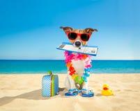 Chek en perro del verano del documento de embarque Fotografía de archivo libre de regalías