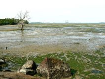 Chek Jawa mudflats royalty-vrije stock foto