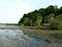 Chek Jawa wetland reserve. At low tide in Pulau Ubin, Singapore Stock Photo