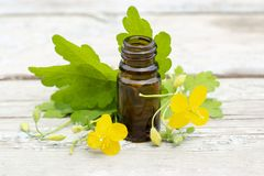 Chelidonium celandine. herb celandine with flowers and tincture of celandine in dark bottle royalty free stock images