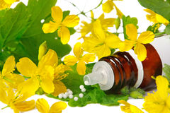Chelidonium for  homeopathy. With yellow blossoms and globule Stock Photos