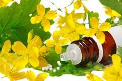 Chelidonium para la homeopatía Fotos de archivo