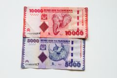 Chelines tanzanos sobre el fondo blanco fotografía de archivo