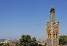 chellah ιστορικό μνημείο στοκ φωτογραφίες με δικαίωμα ελεύθερης χρήσης
