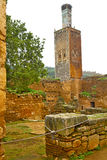 Chellah  in        africa the old roman deteriorated      and si Royalty Free Stock Image