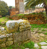 Chellah  in morocco africa the old roman deteriorated monument a Royalty Free Stock Photo