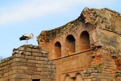 Chellah Rabat, Marocko Royaltyfria Bilder