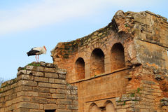 Chellah, Rabat, Maroko Obrazy Royalty Free