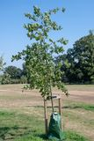 Tree with irrigation grow bag Stock Photos