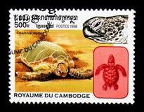 Chelonia mydas della tartaruga di mare verde, serie delle tartarughe, circa 1998 Immagini Stock Libere da Diritti