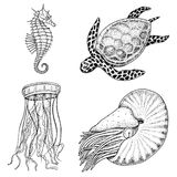 Cheloniidae de créature de mer ou tortue verte et hippocampe pompilius, méduses et étoiles de mer ou mollusque de nautilus gravé illustration de vecteur