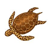 Cheloniidae de créature de mer ou tortue verte gravé tiré par la main dans le vieux croquis, style de vintage nautique ou marin,  illustration libre de droits