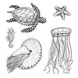 Cheloniidae della creatura del mare o tartaruga verde e ippocampo nautilus pompilius, meduse e stelle marine o mollusco inciso illustrazione di stock