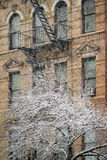 Chelsea Building and Snow Covered Tree, Winter Storm, New York Stock Images