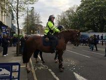 Chelsea Police hästar Royaltyfri Foto