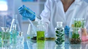 Chemia naukowiec analizuje ciekłą miksturę, ziołowy ekstrakt dla pachnideł fotografia stock