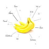 The chemical composition of banana Stock Photos
