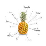 The chemical composition of pineapple Royalty Free Stock Photos