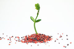 Chemical fertilizer agriculture Royalty Free Stock Image