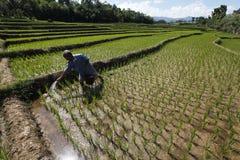 Chemical fertilizers Stock Photo