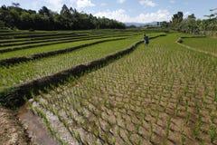 Chemical fertilizers Stock Photos