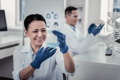 Scientist making the experiment with the flask stock image