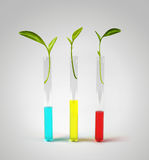 Sprouts in test tubes Royalty Free Stock Images
