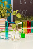 Chemical flasks with liquid royalty free stock photo