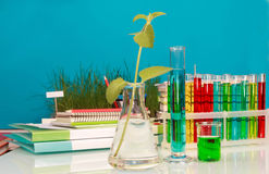Chemical flasks with liquid Royalty Free Stock Image