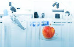 Chemical Laboratory of the Food supply Stock Photo