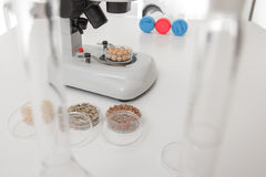 Chemical Laboratory of the Food supply . Food in laboratory, dna modify Royalty Free Stock Photos