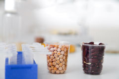 Chemical Laboratory of the Food supply . Food in laboratory, dna modify .Toning image. Stock Photography