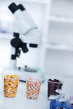 Chemical Laboratory of the Food supply . Food in laboratory, dna modify . Royalty Free Stock Image