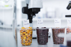 Chemical Laboratory of the Food supply . Food in laboratory, dna modify . Royalty Free Stock Images