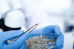 Chemical Laboratory of the Food supply . Food in laboratory, dna modify . Royalty Free Stock Photos