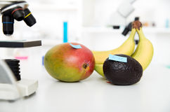 Chemical Laboratory of the Food supply . Food in laboratory, dna modify . Stock Photography