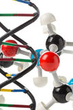 Chemical molecule model and DNA structure model over white backg Stock Images