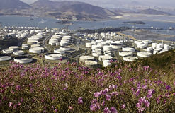 Chemical plant with wild flowers. A large chemical manufacturing plant near the ocean and nature Stock Photography