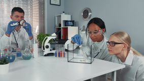 In a chemical research laboratory mixed race team providing two different experiments stock footage