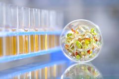 Chemical tests to assure quality and safety of been sprouts Stock Photo
