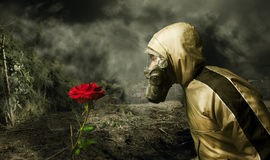 Chemical Warfare. Man in a gas mask looking at a rose Royalty Free Stock Image