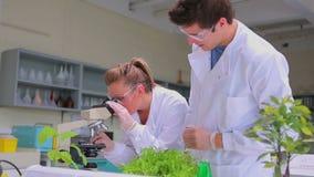 Chemici die door microscoop kijken stock footage