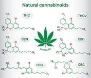 Chemiczne formuły naturalni cannabinoids w marihuanach: tetrahyd Obraz Stock